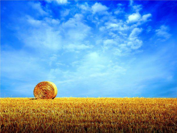 Segando el trigo en otoño