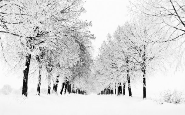 Bosque congelado invierno