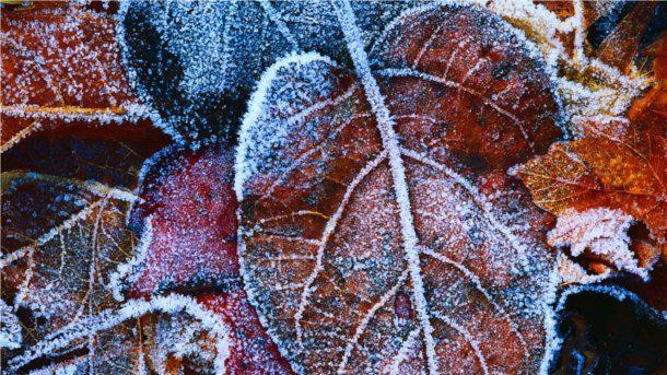 Hoja seca en invierno