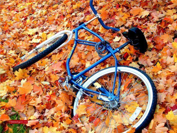 Bicicleta antigua bosque otoño