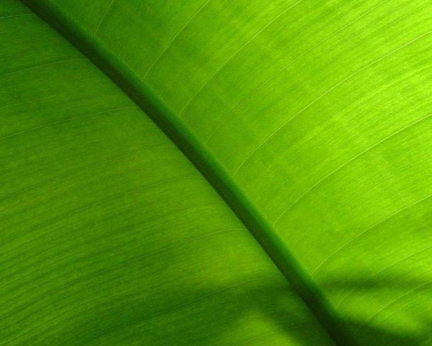fondo de pantalla de hojas