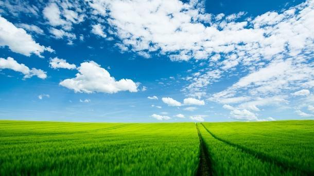 fondo cielo despejado cultivos