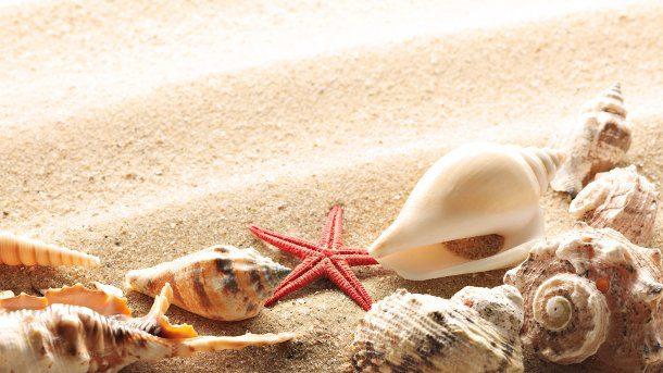 estrella de mar, caracol y arena blanca
