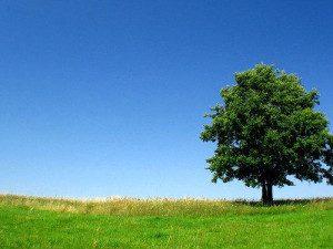 imágenes de árboles