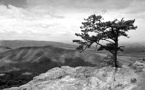 árbol en el gran cañon