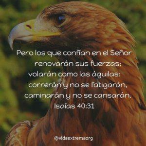 Isaías 40:31